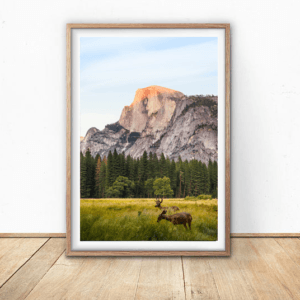 tranh canvas treo tuong gam co 300x300 Trang chủ